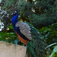 Los Angeles Arboretum by frontosa