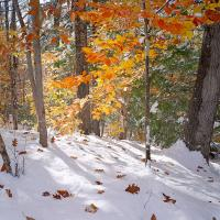 early snow by schuster in Regular Member Gallery