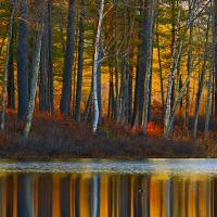 reflections of fall by schuster in Regular Member Gallery