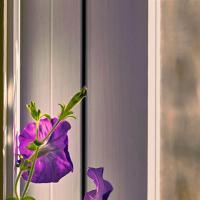morning window by schuster in Regular Member Gallery