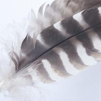 Feather 1 by Vincent Goetz
