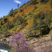 Merced Canyon by Vincent Goetz in Regular Member Gallery