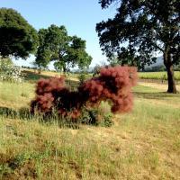 Smoke 3 by Vincent Goetz