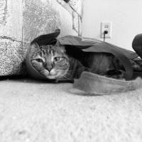 Bag O Cat by jminor in Regular Member Gallery