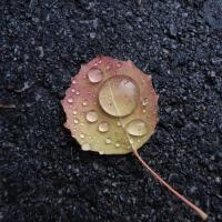 Beaded Leaf by jminor in Regular Member Gallery