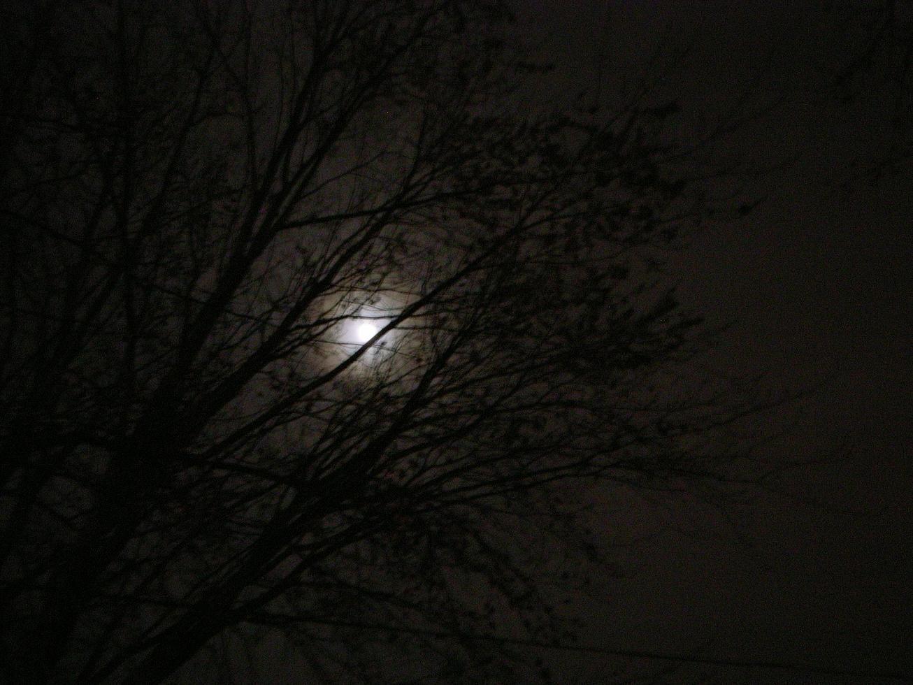 Moon Climbs A Tree by jminor in Regular Member Gallery