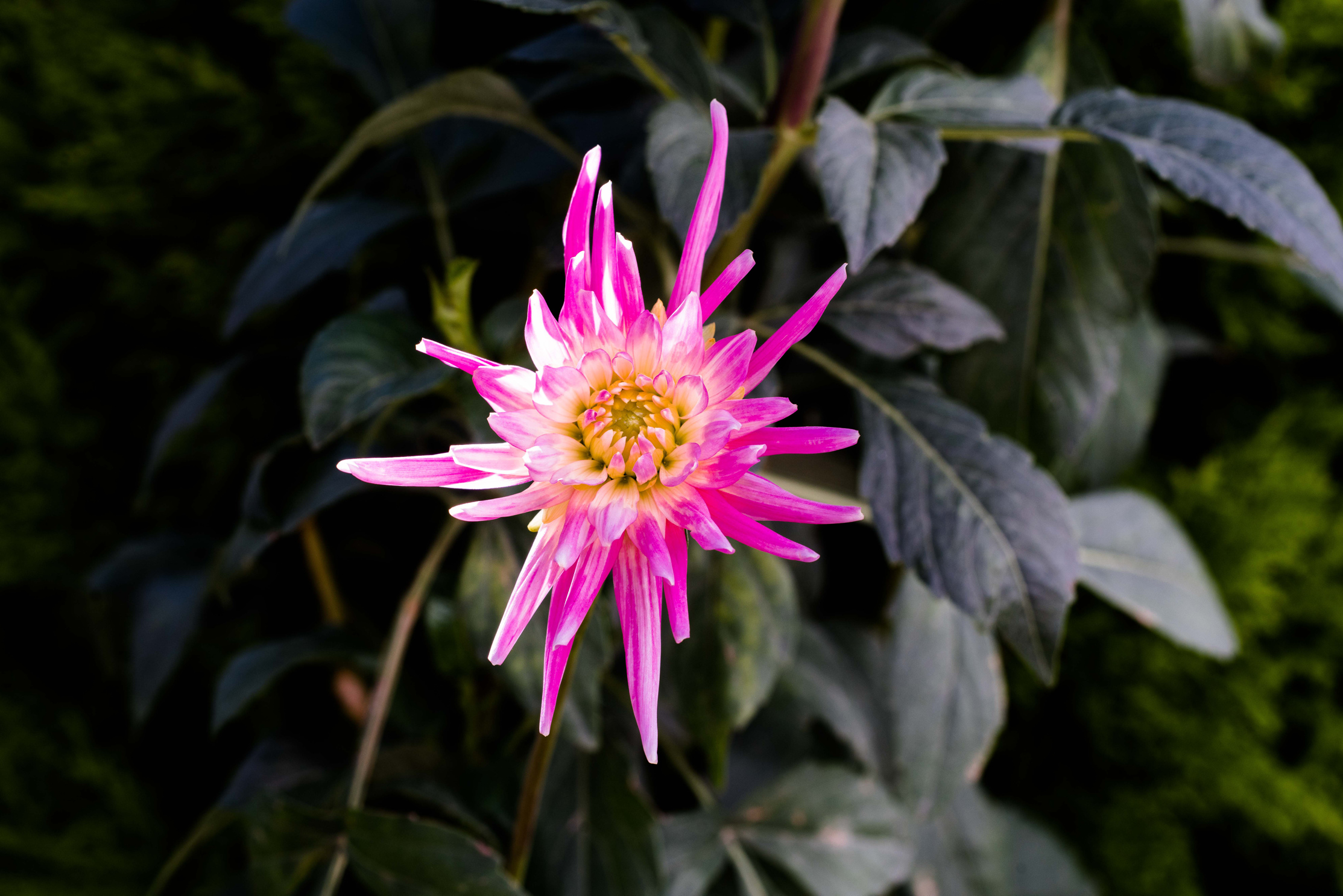 Flower by rweissman in Regular Member Gallery