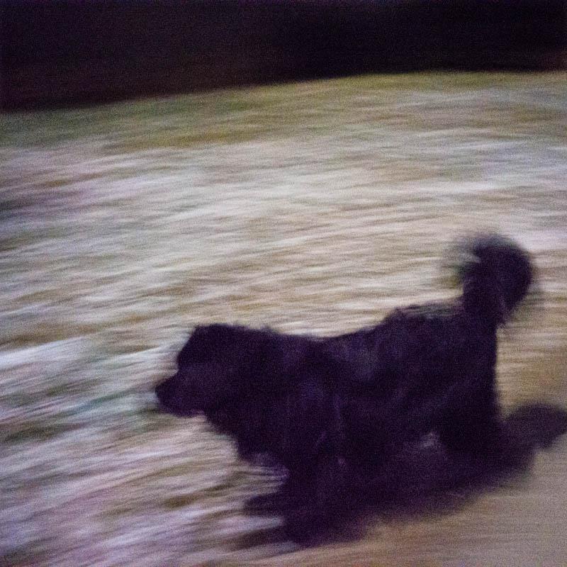 Moonlight Dog Walk by Shashin in Regular Member Gallery
