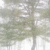 Nor'easter In Maine by Shashin in Regular Member Gallery
