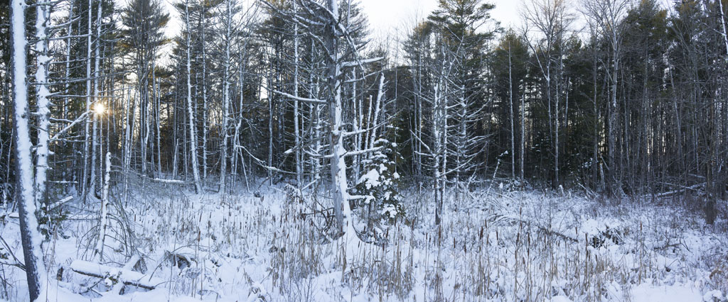 Maine Winter by Shashin in Regular Member Gallery
