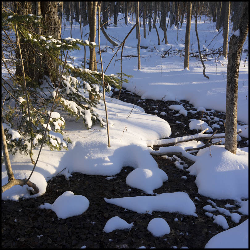 Winter In Maine by Shashin in Regular Member Gallery