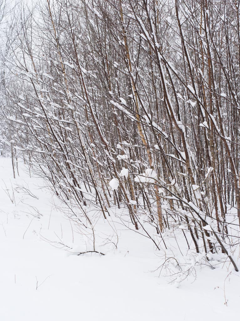Winter Storm by Shashin in Regular Member Gallery