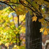 Autumn, Ontario by jctodd