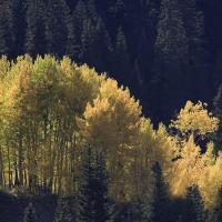 Hillside Gold by hdrmd in Regular Member Gallery