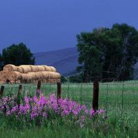 Hay Stacked On Crested Butte, Co by hdrmd in Regular Member Gallery