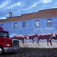 Herding Cattle By Truck by hdrmd in Regular Member Gallery