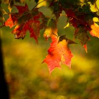 Ky Red Autumn by hdrmd