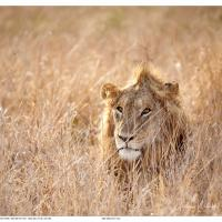 Leo in the grass by GrahamWelland in GrahamWelland