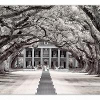 Oak-alley-plantation-ir-bw-1k-framed