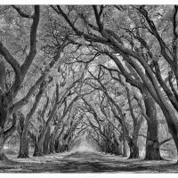 Evergreen-plantation-road-ir-b W-1k-framed by GrahamWelland in Regular Member Gallery