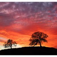 Hornitos-road-alpa-two-trees-sunset-1k-2 by GrahamWelland in Regular Member Gallery