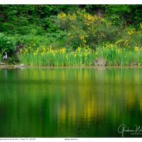 Random Pond WA by GrahamWelland