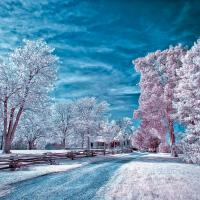 Fun With Ir by GrahamWelland in Regular Member Gallery