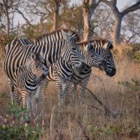 Safari 2019 by GrahamWelland in GrahamWelland