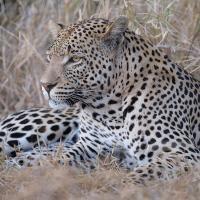 Safari 2019 by GrahamWelland