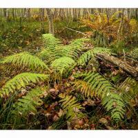 Acadia-fern-1k-framed by GrahamWelland in Regular Member Gallery