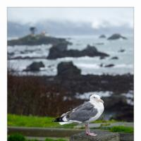 Crescent City Lighthouse And Seagull by GrahamWelland