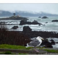 Crescent City Seagull @ Iso 400 by GrahamWelland