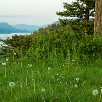 Crown-point-with-dandelions by GrahamWelland