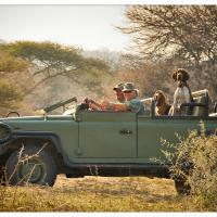 Dogs on Safari by GrahamWelland in GrahamWelland