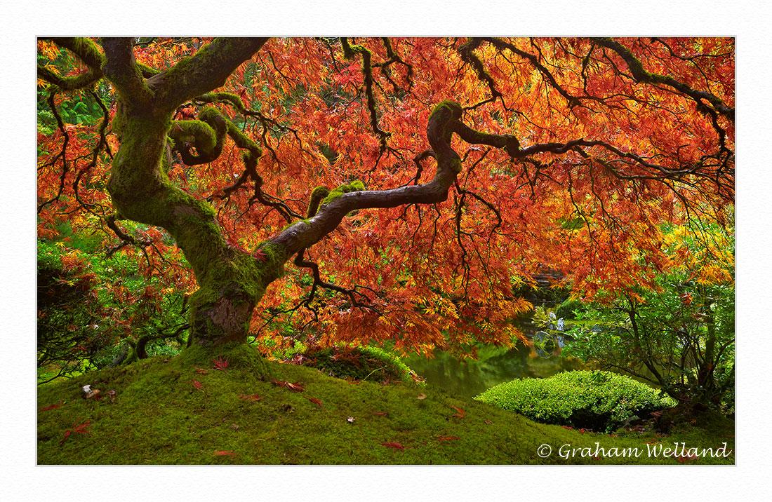 Portland Japanese Garden Tree