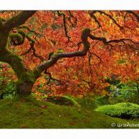 Portland Japanese Garden Tree by GrahamWelland in Regular Member Gallery