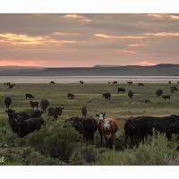 Serengetti - Oregon Style by GrahamWelland in Regular Member Gallery