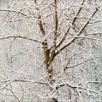 Snow On Tree by GrahamWelland