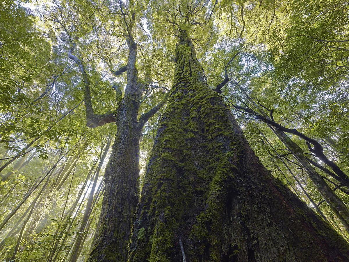Rainforest, Tasmania by Robblakers in Regular Member Gallery