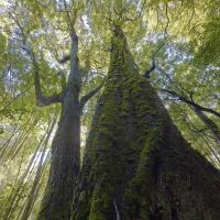 Rainforest, Tasmania by Robblakers in Regular Member Gallery