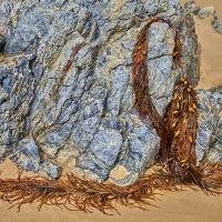 cf000210 by Bill Caulfeild-Browne in Regular Member Gallery