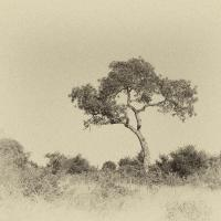 p0003799 by Bill Caulfeild-Browne