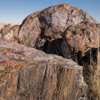 Petrified  National Forest by Guy Mancuso in Guy Mancuso