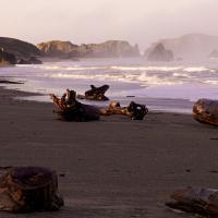 P30+ Oregon Workshop by Guy Mancuso
