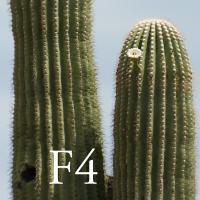F4crop by Guy Mancuso in Guy Mancuso