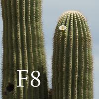 F8crop by Guy Mancuso in Guy Mancuso
