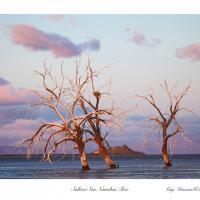 Salton Sea Namibia
