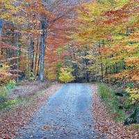 Autumn On Lake Road by WWLEE in Regular Member Gallery