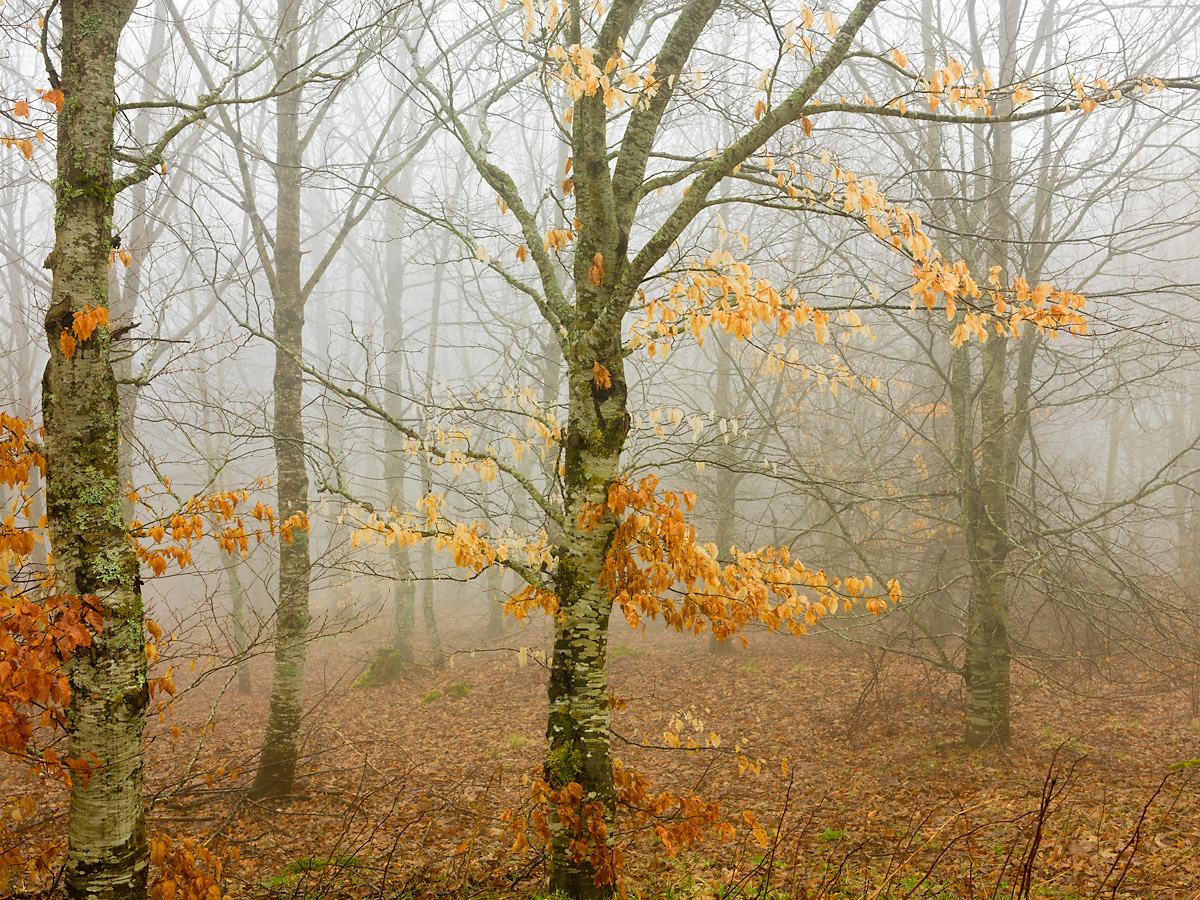 Auvergne 2 by jerome in Regular Member Gallery