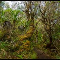 La Réunion Island 3 by jerome in Regular Member Gallery